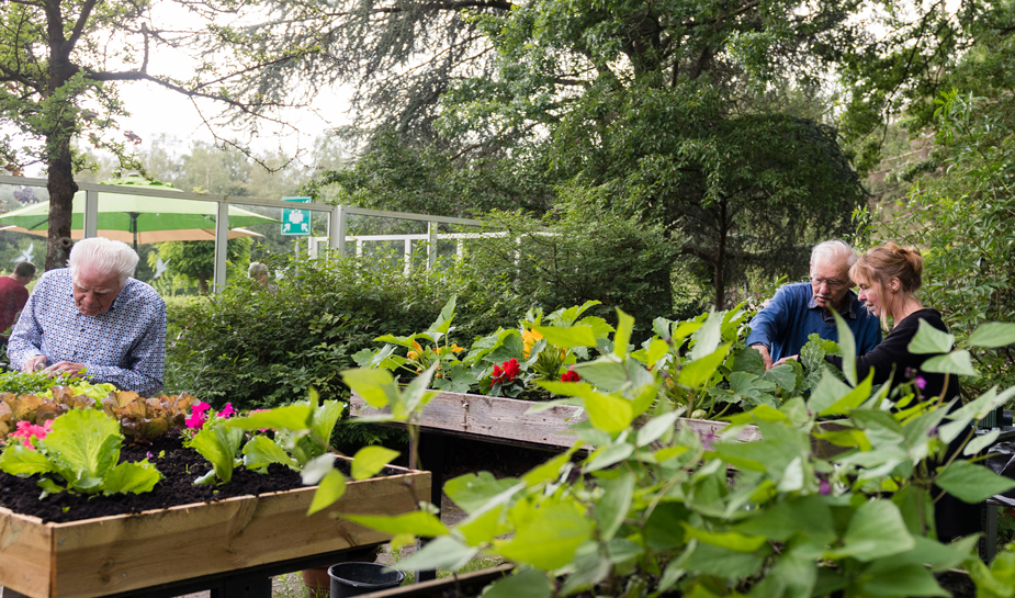 Tuinieren bij dagbesteding de buitenhof tilburg